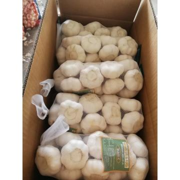2018 pure white garlic with small package to Japan Market (Top Quality )