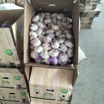 2018 10KG Loose carton Normal white garlic to Brazil Market from china (New Client )