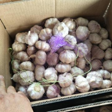 10KG Loose carton Normal white garlic to Brazil Market from china