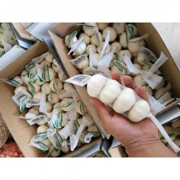 2018 china Pure white garlic with small package to Iraq market