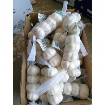 Pure white garlic with small package are exported to Iraq market .