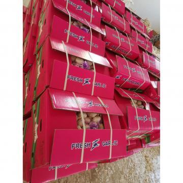 10kg loose carton package garlic to Angola market from china