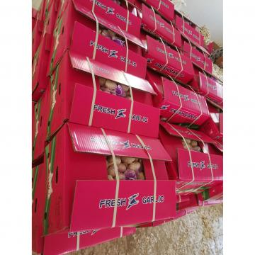 2018 china garlic with 10kg loose carton package are exported to Angola market .
