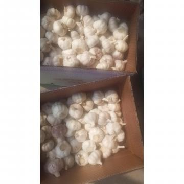 10kg loose carton package to Brazil market