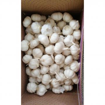 10KG loose carton pure white garlic exported to Kenya market