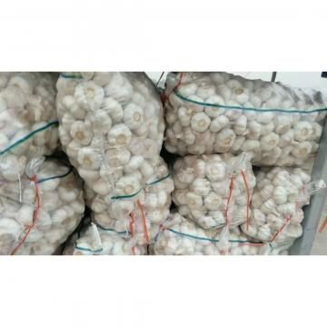 Cold storage china Garlic to Brazil Market