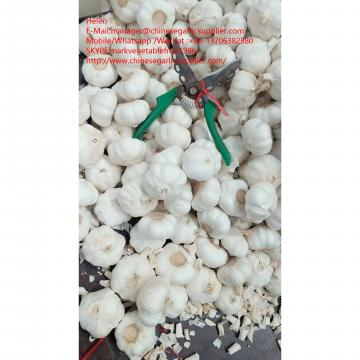 pure garlic with small meshabg package to EU market