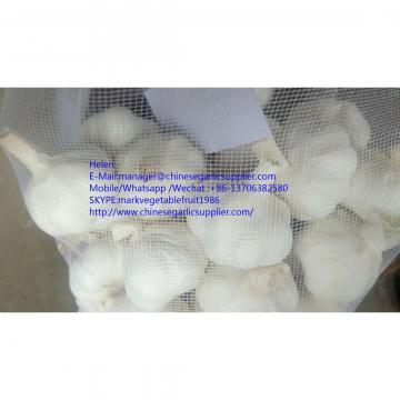 super quality pure white garlic with meshabg package