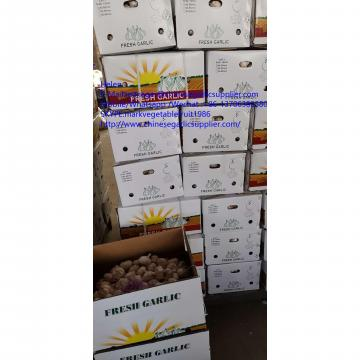 10KG Loose carton normal white garlic to Tunis market
