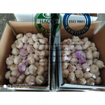 China garlic are exported to North America market  with loose carton package