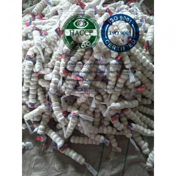 China pure white garlic to Nicaragua market with tube package