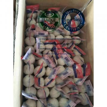 pure white garlic to Nicaragua market with tube package from China garlic factory