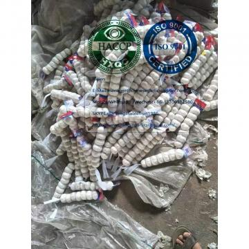 China pure white garlic with tube package are exported to Nicaragua market
