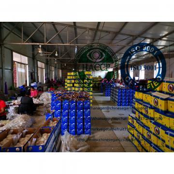 Normal white garlic with 10KG loose carton to Brasilian market.