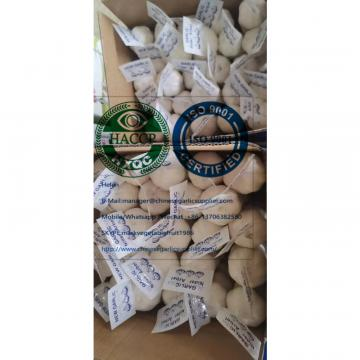 China pure white garlic with tube and carton package for Iraq market.