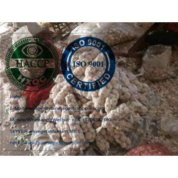 China normal white garlic to Ghana market