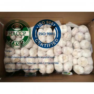 Fresh normal white garlic are exported to  Ghana market from china