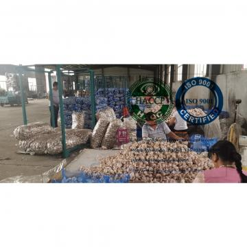 China normal white garlic with meshbag package to Dominica market