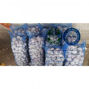 Top Quality China normal white garlic with meshbag package to Dominica market