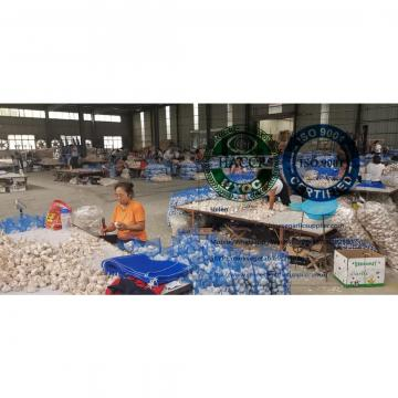 normal white garlic with meshbag package to Dominica market from china garlic factory