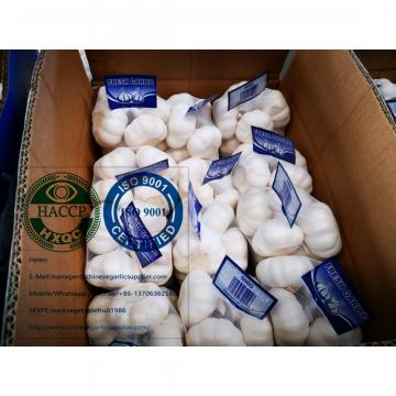 Top quality china pure white garlic are exported to Holland market