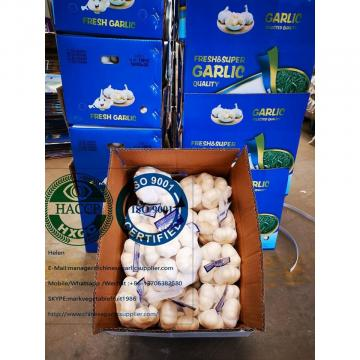 china pure white garlic with tube meshbag to Holland market
