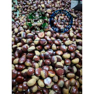 2019 new crop china fresh chestnut