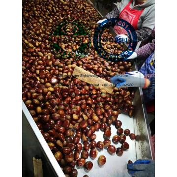 2019 new crop china fresh chestnut on hot selling