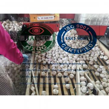 Normal white garlic are exported to Africa market from china