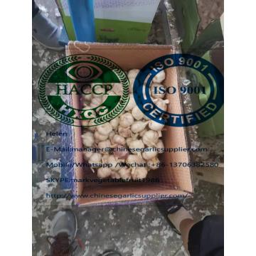 china garlic are exported to Africa market