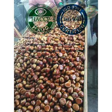 2019 new crop china chestnut are exported to Turkey market