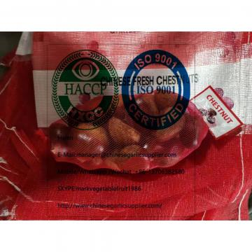 Fresh chestnut are exporting to turkey market from china factory