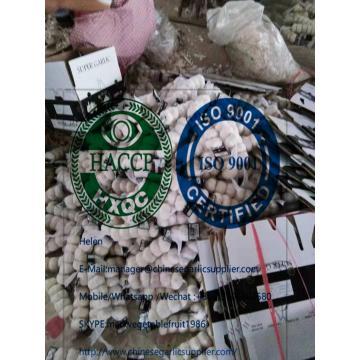 Top pure white garlic 4.5cm to Iraq market through Mersin port. Turkey.