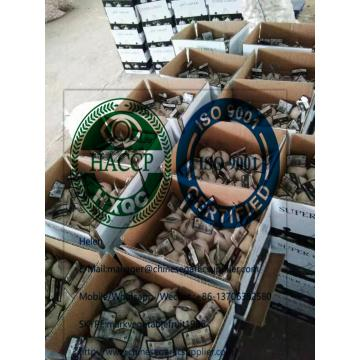 4.5cm pure white garlic with tube and carton package to Iraq from china garlic factory