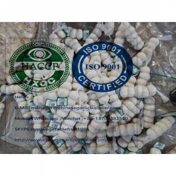 2019 new crop cold storage pure white garlic to turkey market from china