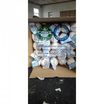 CHINA PURE WHITE GARLIC WITH TUBE MESHABG TO HONDURAS MARKET