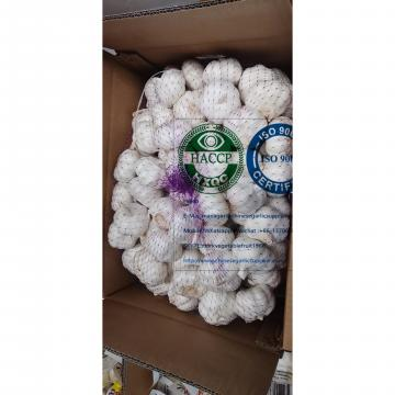 Top quality china pure white garlic to EU market