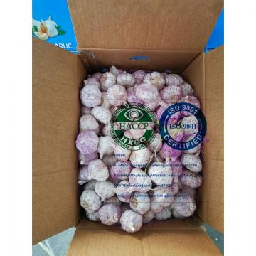 NORMAL WHITE GARLIC WITH 10KG LOOSE CARTON PACKAGE TO DAKAR ,SENEGAL MARKET