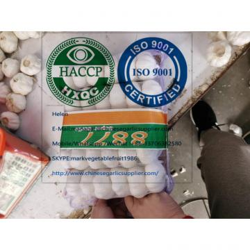 Top Quality pure white garlic with tube meshbag package to Lebanon market