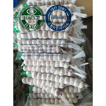 Top Quality Normal white garlic with mesh bag package to Panama market