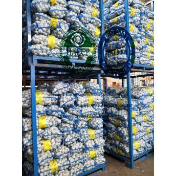 6.0-6.5cm pure white garlic with 10kg mesh bag To turkey market