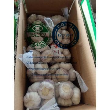 Normal white garlic with carton package to EU market