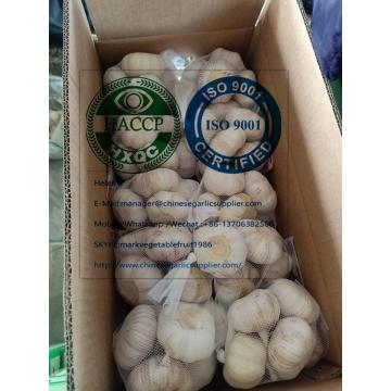 China top quality Normal white garlic with carton package to EU market