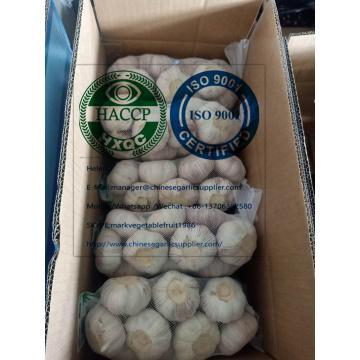 Normal white garlic with carton to EU market from china