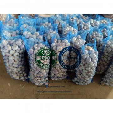 (5.5-6.0cm) size china normal white garlic with meshbag package to Dominican Republic market