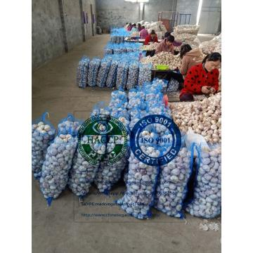 china normal white garlic with meshbag package to Dominican Republic market