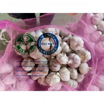 Normal white garlic with meshbag package to Latin America market
