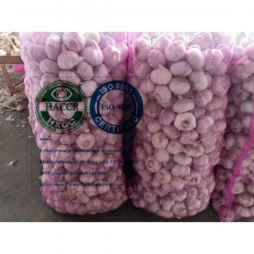 Normal white garlic with meshbag package to Latin America market