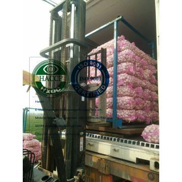 China Normal white garlic with meshbag package to Latin America market