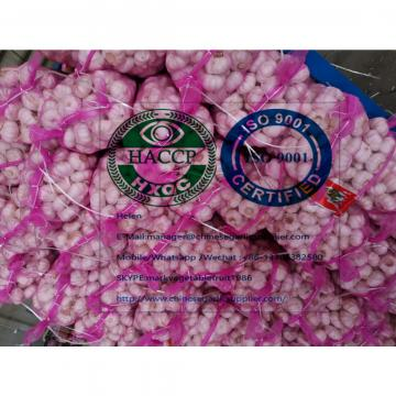 (6.0-6.5cm)  china pure white garlic to Turkey Market